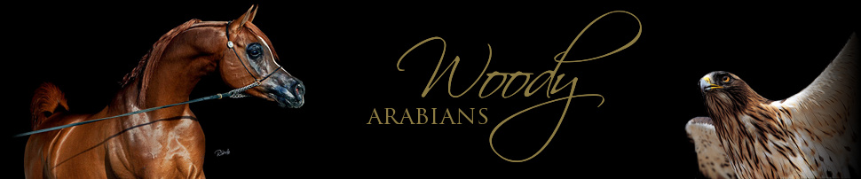 Woody Arabian - home of Shir Ibn Massai